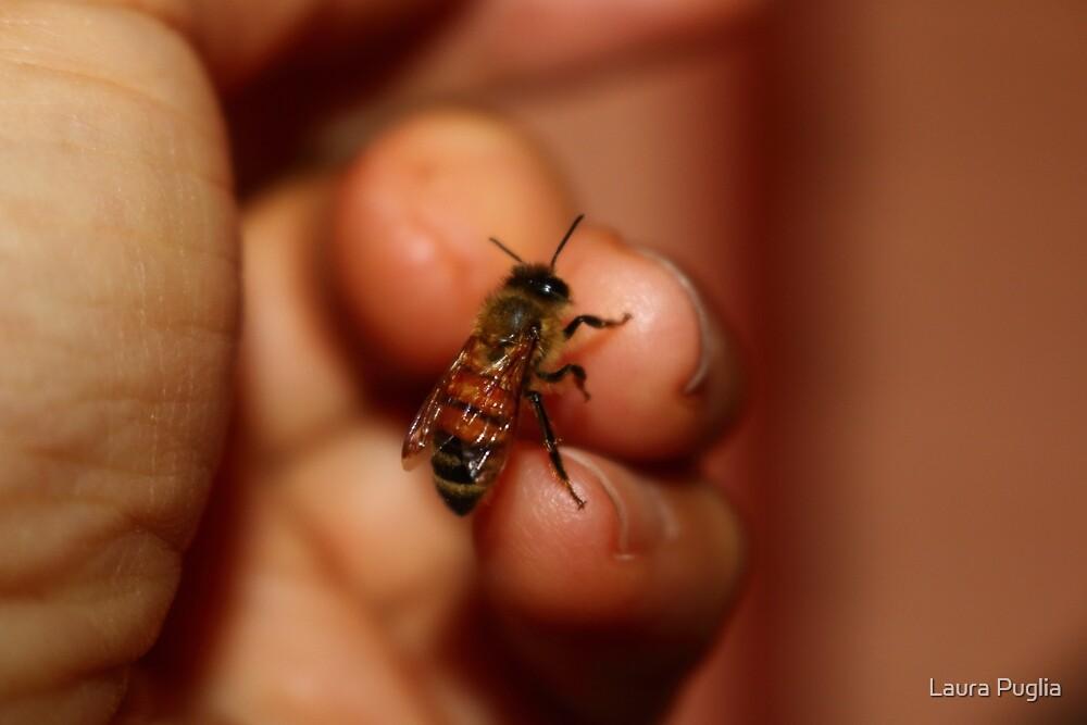 Rescued Honeybee by Laura Puglia