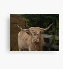 Highland Cattle on the Isle of Skye Canvas Print