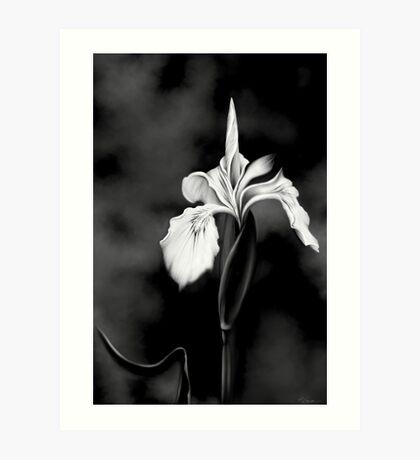 Wild Iris - Black & White Photo Painting Art Print