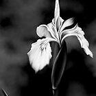 Wild Iris - Black & White Photo Painting by Renee Dawson