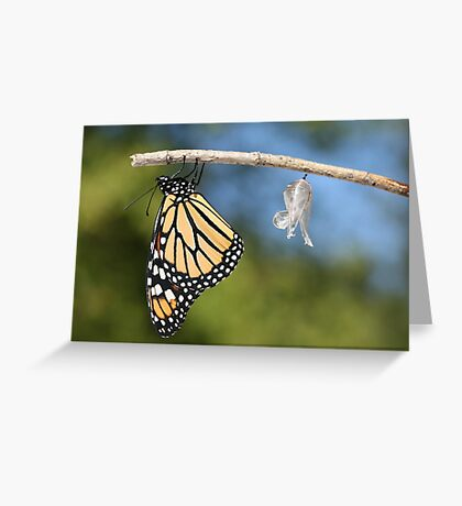 Monarch Butterfly & Chrysalis Greeting Card
