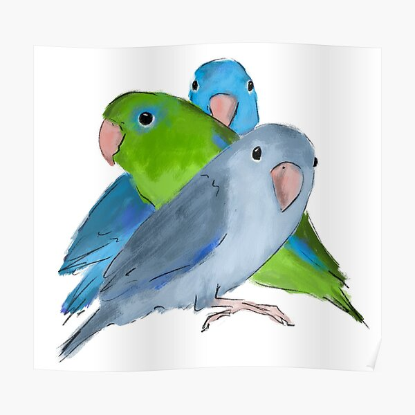 Pacific parrotlet Poster