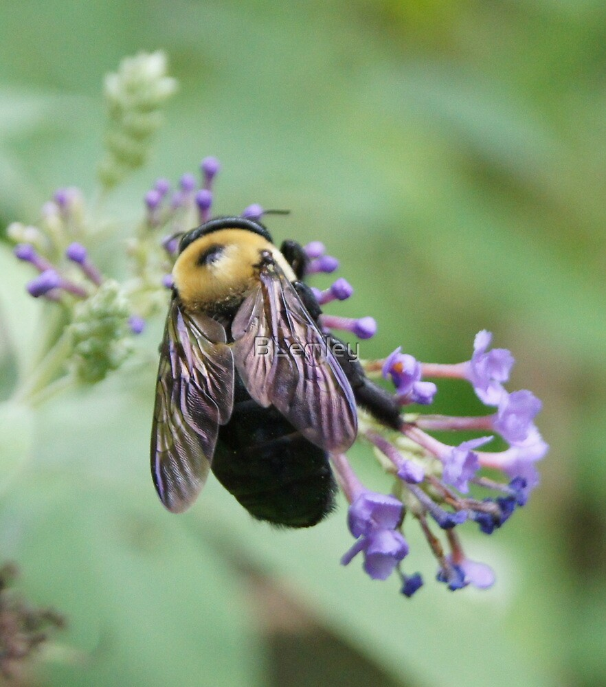 Bee-utiful Bee! by BLemley