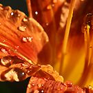Lily After The Rain by Rhonda Blais