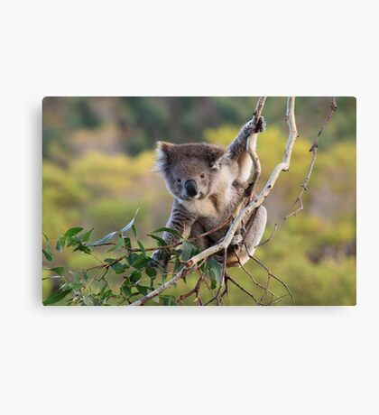Hanging Around ... Canvas Print