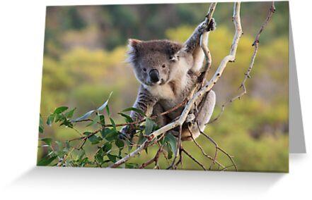 Hanging Around ... by Jared Revell
