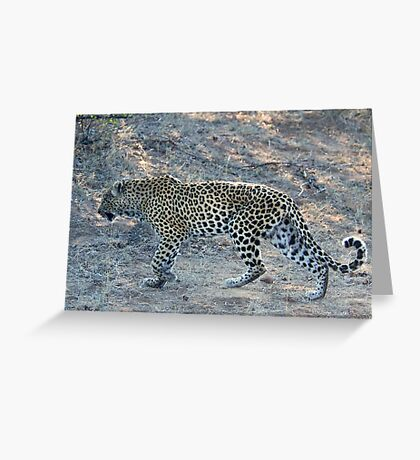 SO CLOSE ! The Kruger National Park, South Africa Greeting Card