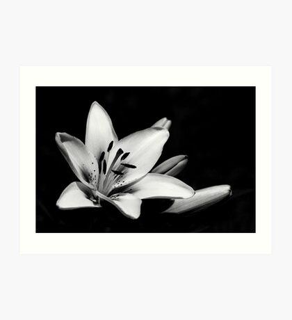 Black & White Lily Art Print