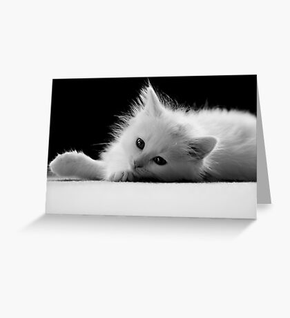 Adorable White Kitten Greeting Card