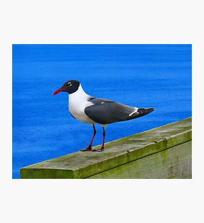 Sitting on the Dock of the Bay Photographic Print