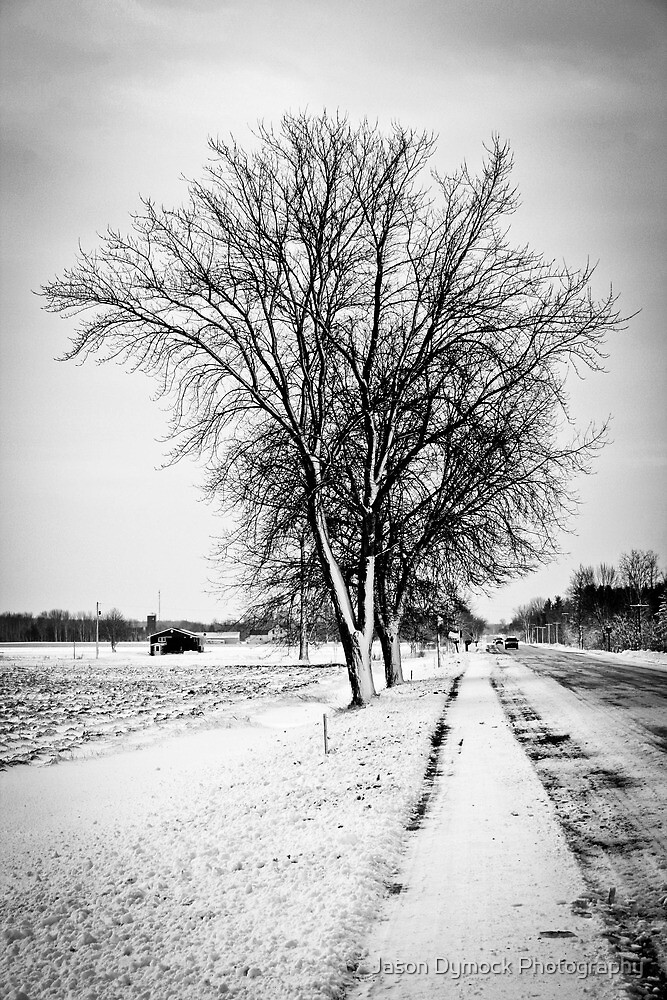 Two Trees by Jason Dymock Photography