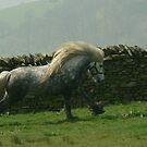 Murthwaite Windrush by Fleur Hallam