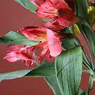 Flower by Lindsey W