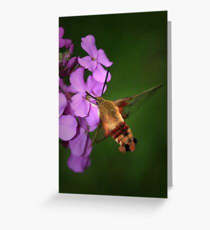 Clearwing Hummingbird Moth II Greeting Card