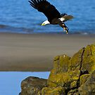 Ocean Eagle by Randall Ingalls