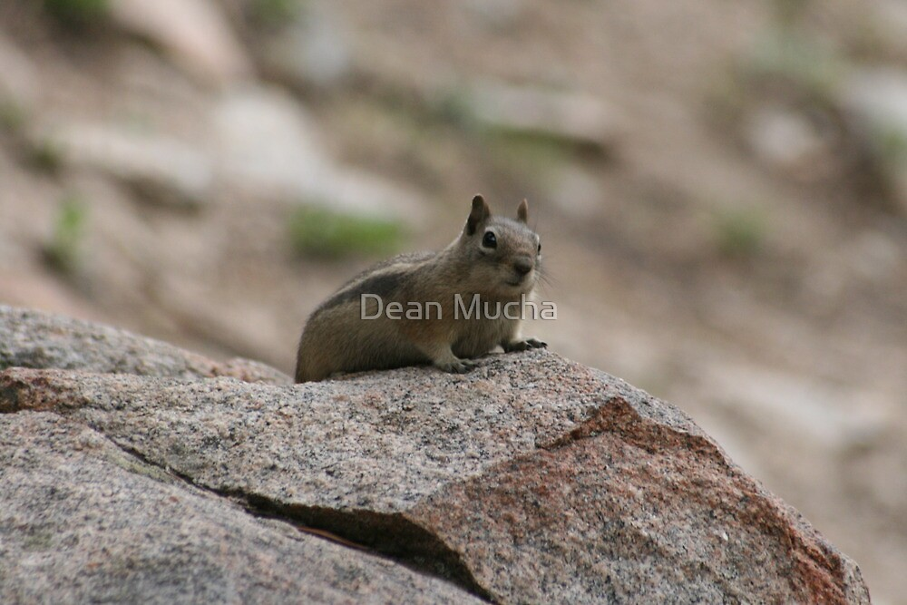 Little Creature In A Big World by Dean Mucha