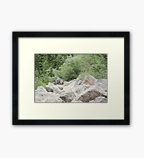 Rocks Among The Shrubs Framed Print
