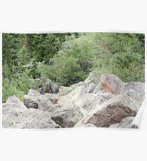 Rocks Among The Shrubs Poster