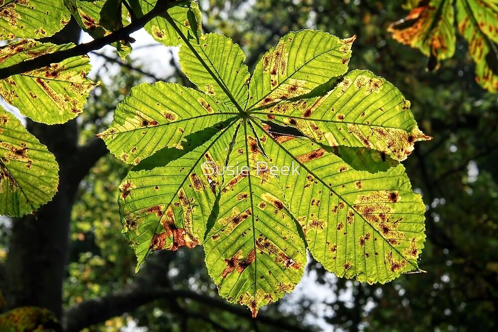 Horse-Chestnut Leaves by Susie Peek