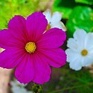Pink Flower by DeePhoto