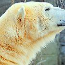 The Arctic King by Alan Mattison
