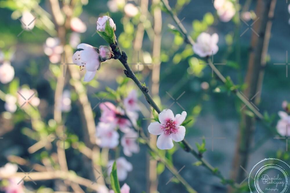 Flowers by DanielaRdzG