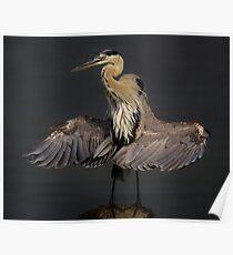 Beautiful Blue Heron Poster
