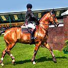 Gorgeous horse by Gouzelka
