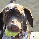 My Ball! by Serinidia