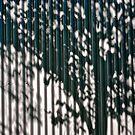 summer shadow  1 by richard  webb