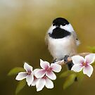 Apple Blossom Chickadee by Renee Dawson