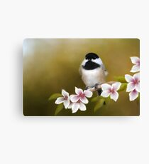 Apple Blossom Chickadee Canvas Print