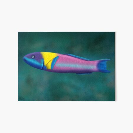Rainbow Wrasse Art Board Print