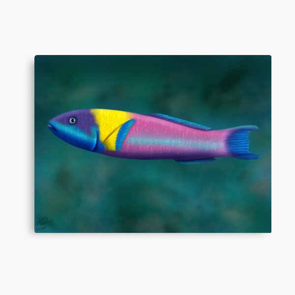 Rainbow Wrasse Canvas Print
