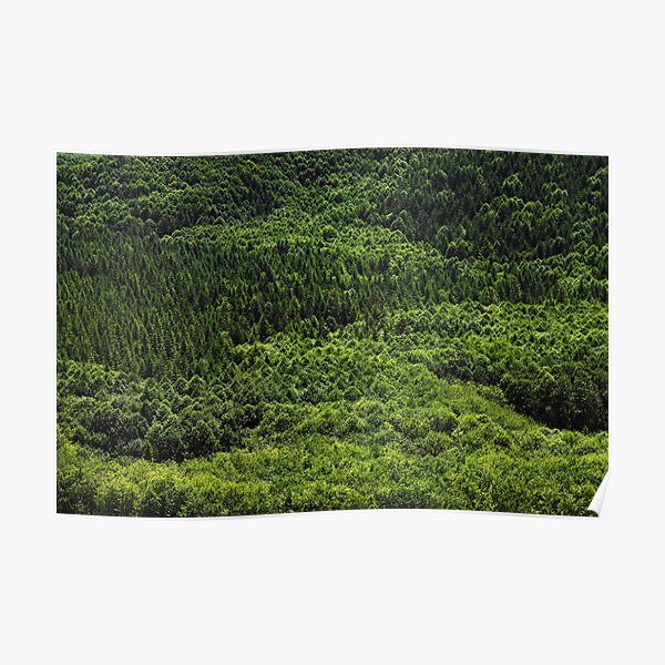 Forest Pattern Poster