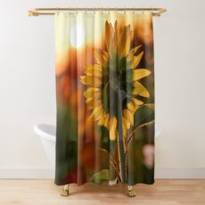 Closeup back view of a sunflower and sunlight Shower Curtain