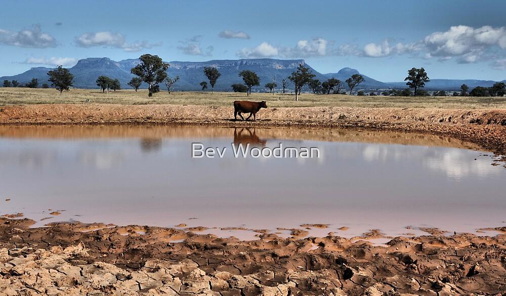 Capertee Billabong - NSW Australia by Bev Woodman