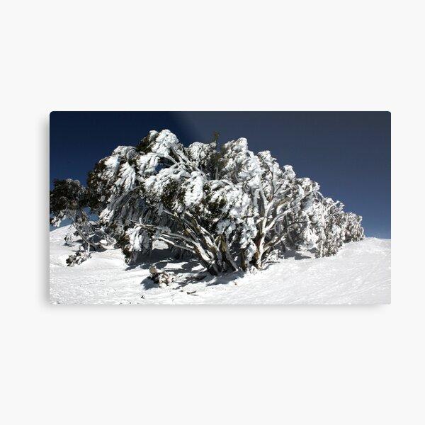Snow Gums at Mt Hotham Metal Print