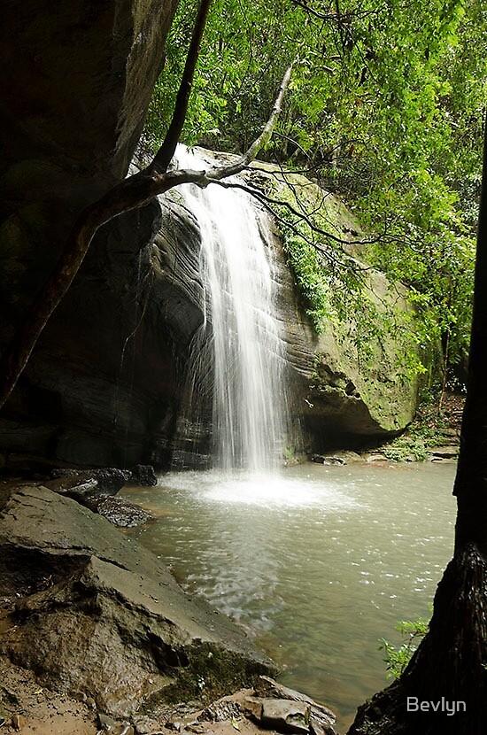 Buderim waterfalls  by Bevlyn