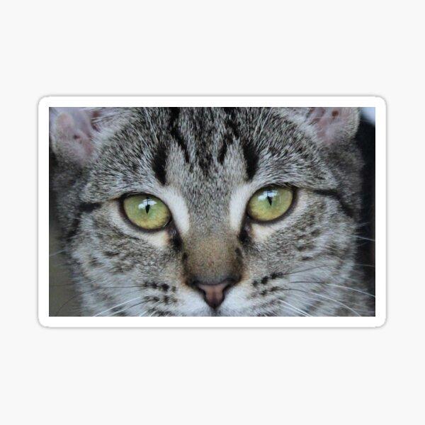 Tabby Cat's Eye Sticker
