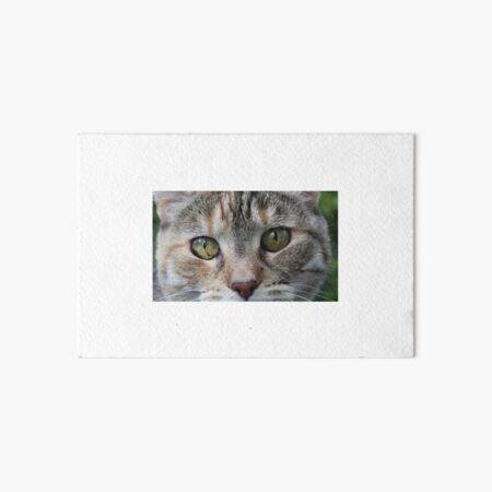 Brown Tabby Cat  Art Board Print