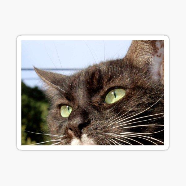 Tuxedo Cat with Sparkling Eyes Sticker