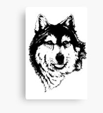 Timber wolf (Canis lupus lycaon) Sub-species of (Canis lupus) Canvas Print