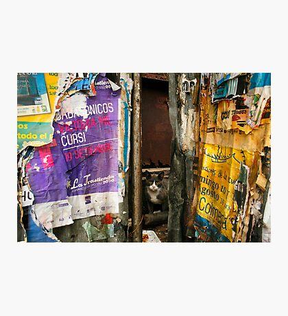 Montevideo, Uruguay 0930 Photographic Print