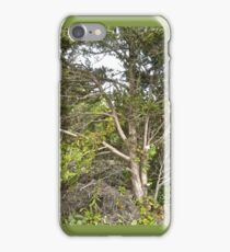 The Tree Across The Road iPhone Case/Skin