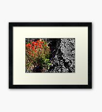 """""""Indian Paintbrush"""" Framed Print"""