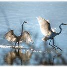 Water Ballet  by Saija  Lehtonen