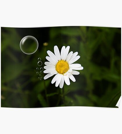 Daisy in a Bubble Poster