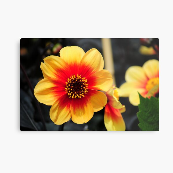 Eden Project flower Metal Print