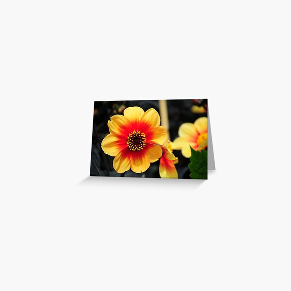 Eden Project flower Greeting Card